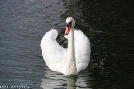 Onze boot, sierlijk als een zwaan
